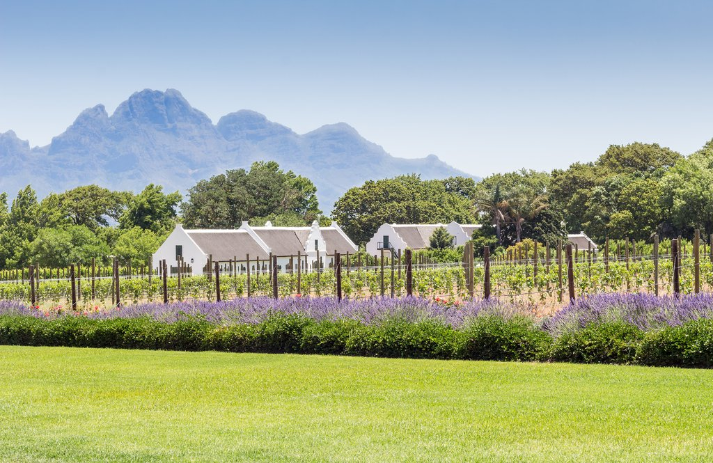 Traditional white-gabled winery in Cape Winelands
