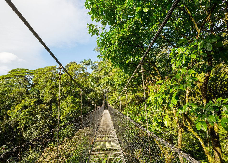 See the rainforest canopy from above
