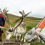Visit the Sami and their reindeer