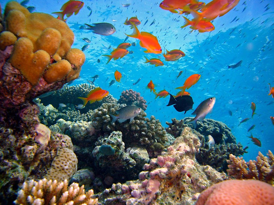 The colorful corals and fish