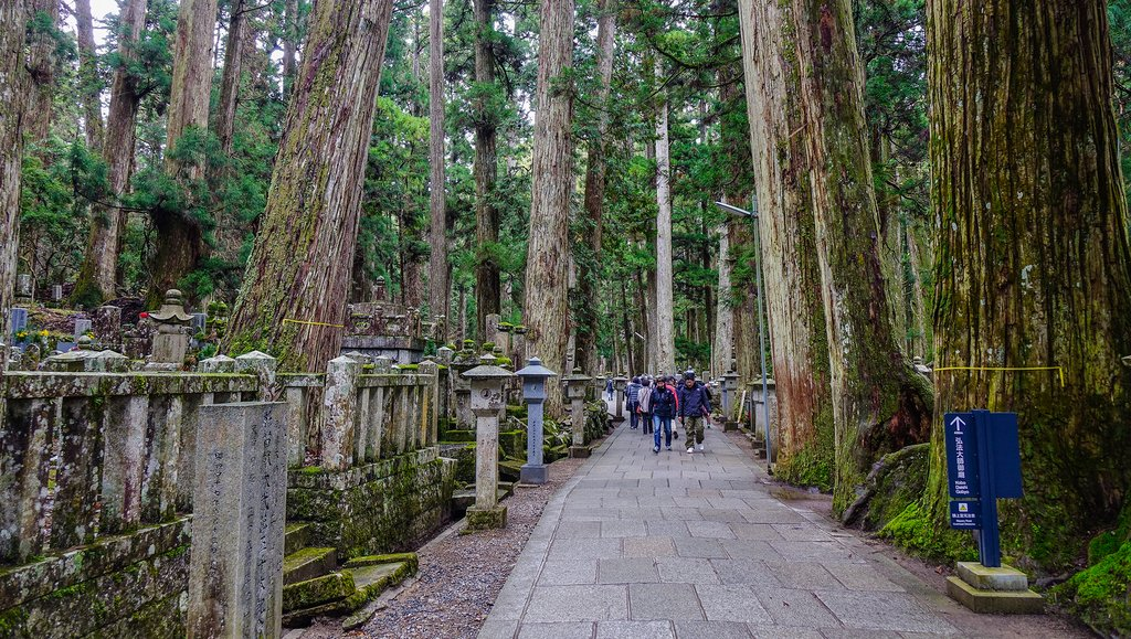 Towering cedars line the walk through Mount Koya's Okuno-in Cemetery.