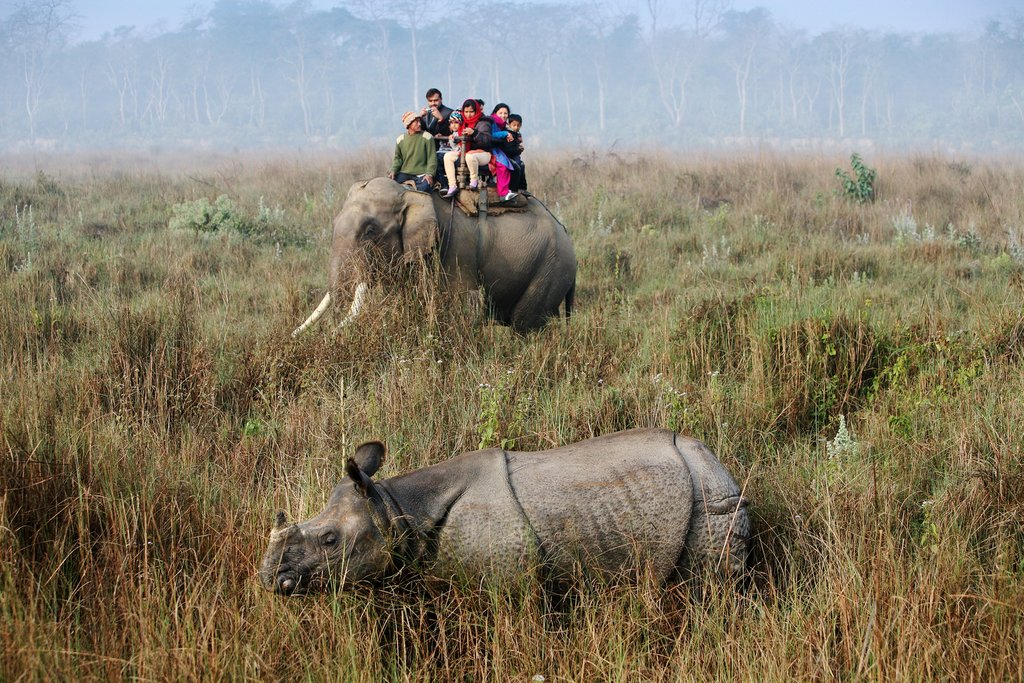 A safari in Chitwan National Park