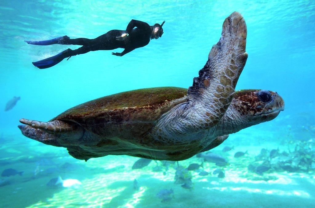 Australia - Great Barrier Reef - Snorkel