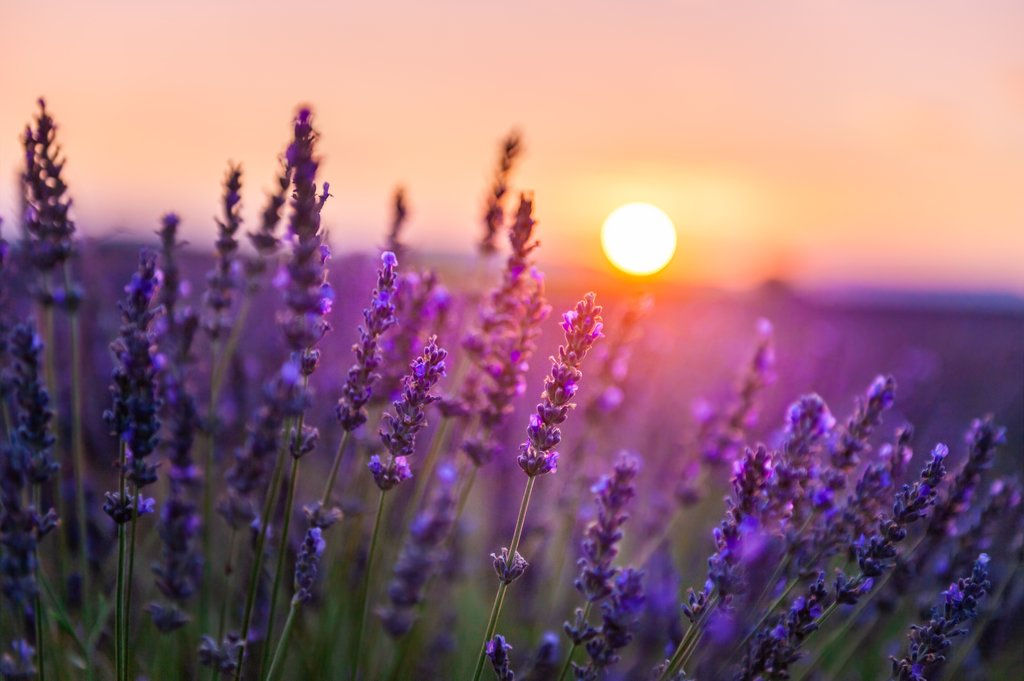 Summer sunset in Provence