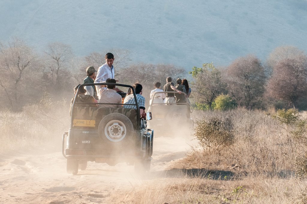Search for the elusive Bengal tiger on a game drive in Ranthambore NP