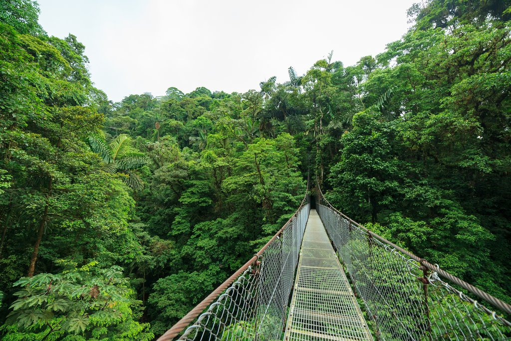A suspension bridge in Monteverde's Cloud Forest