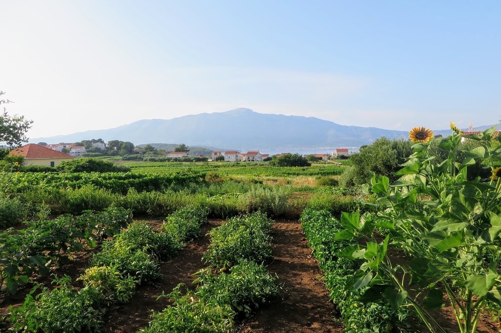 Grk vineyard covered hills and Lumbarda