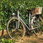 Bike in St Emilion vineyards