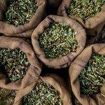 Treasure Hunt & Kalamata Olive Oil Tasting