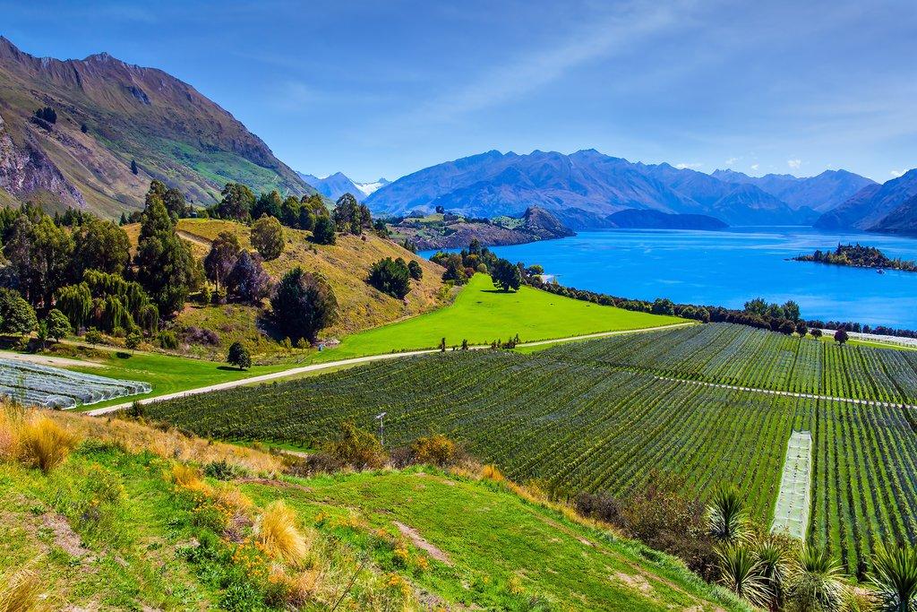 Vineyards overlooking Lake Wanaka