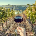 Half-Day Wine Tasting In Frascati from Rome