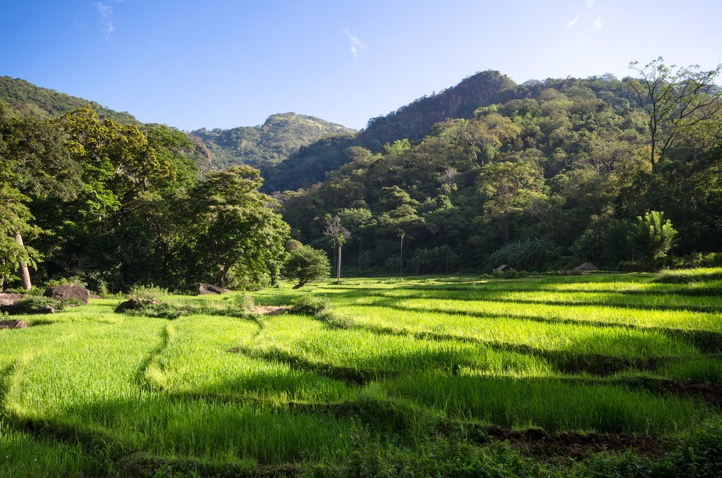 Go hiking through the paddy fields and forests of the Knuckles Range