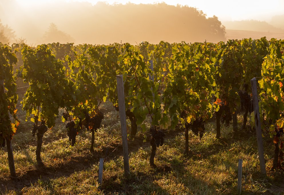 Drive through the vineyards of Medoc