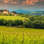 A typical Tuscan vineyard in the Chianti region.