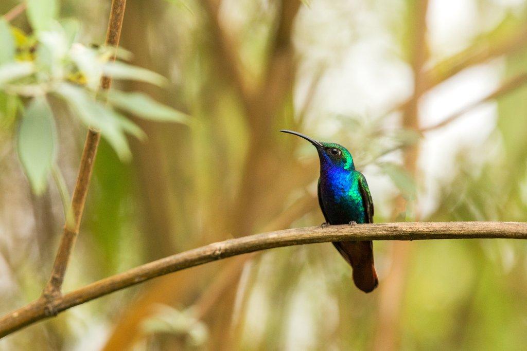 Birding in Santa Marta