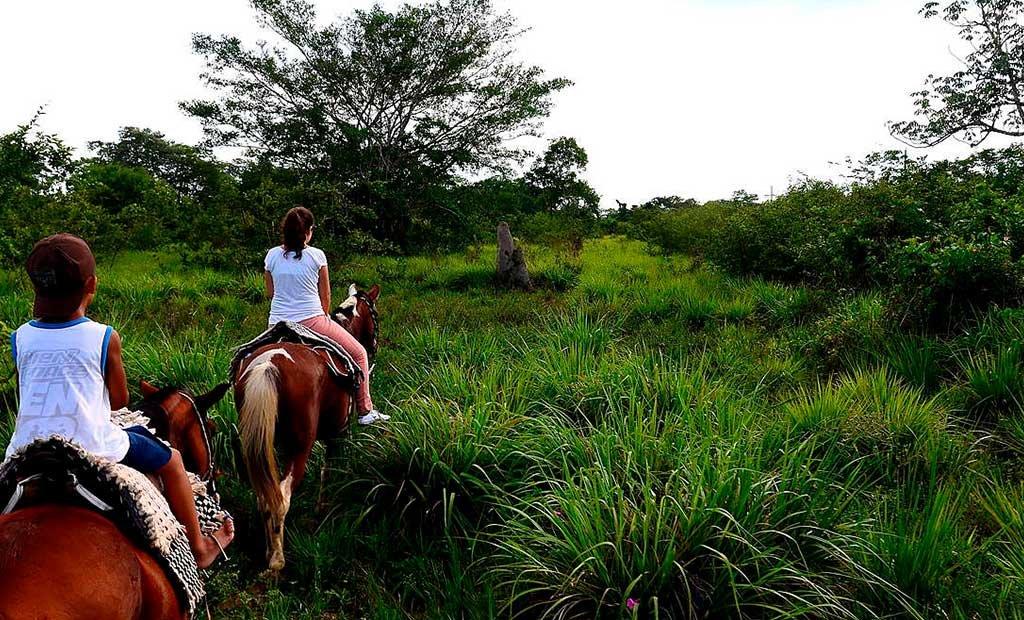 Horseback riding through the Pantanal