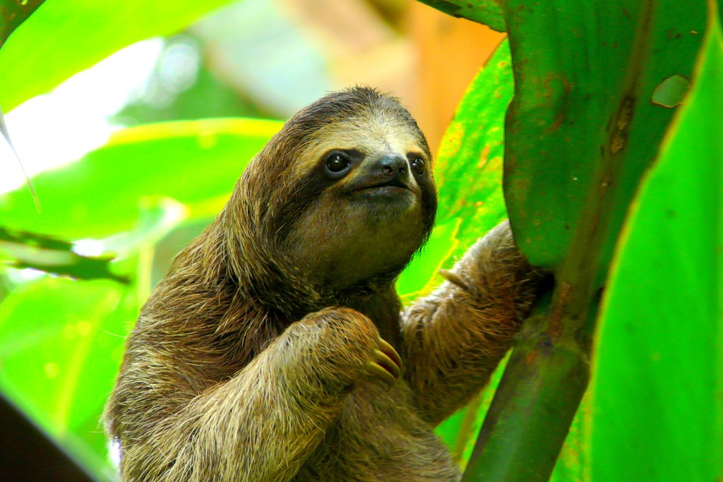 A sloth in a tree in the jungle