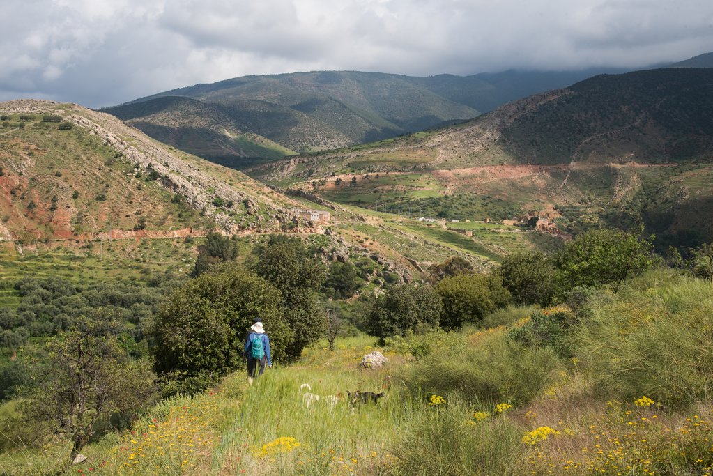 Hike the Atlas foothills through wildflowers and local communities