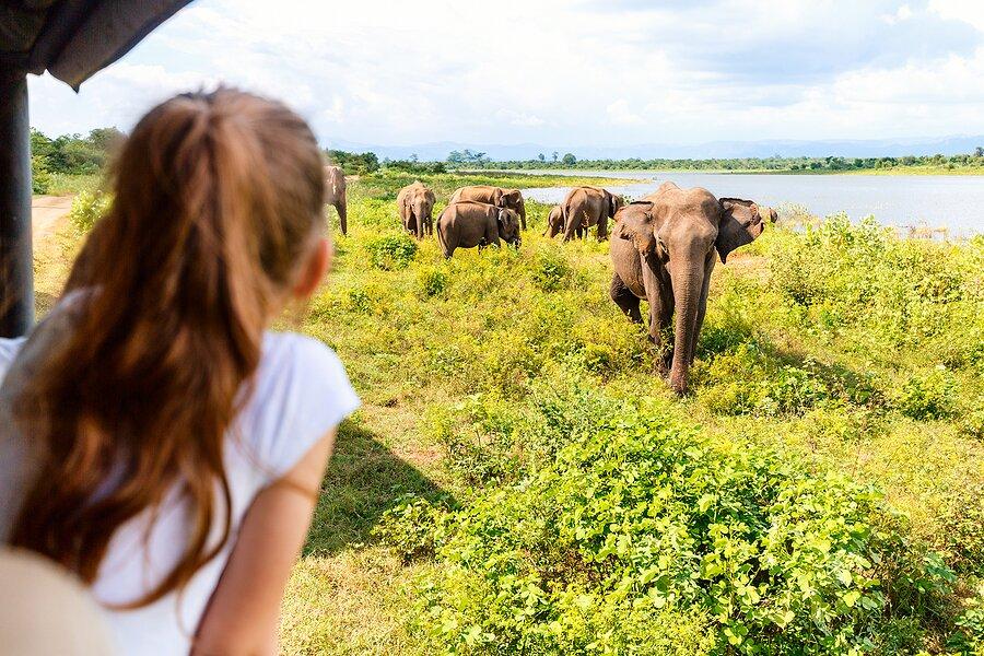 Enjoy a safari adventure in Wilpattu National Park