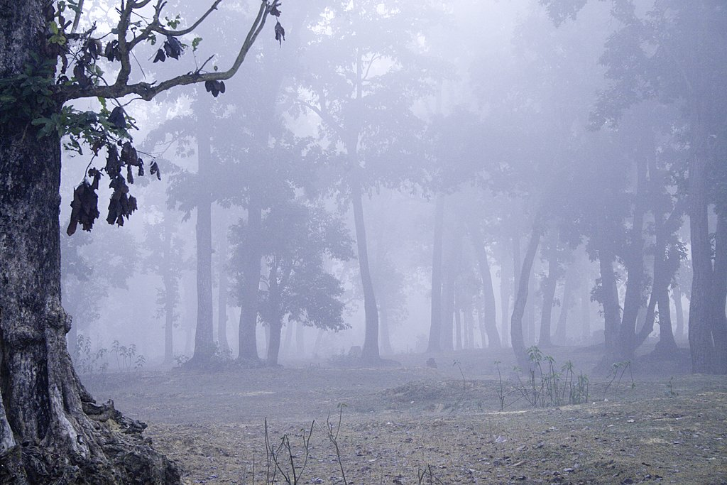 Dawn in Bardia National Park