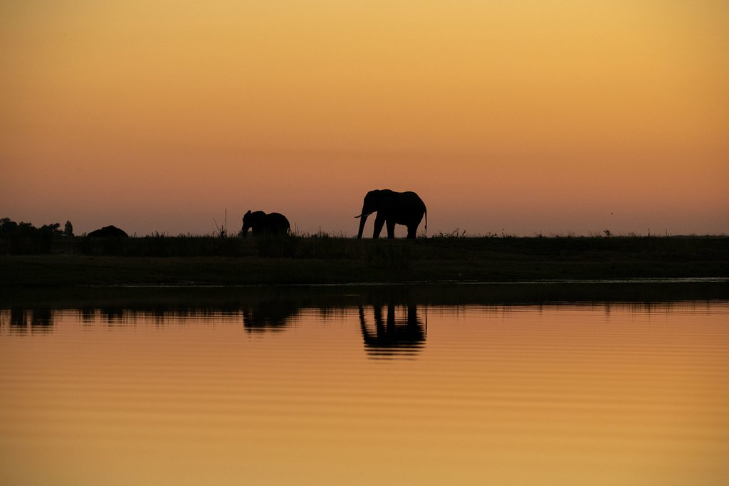 Elephants on the shore