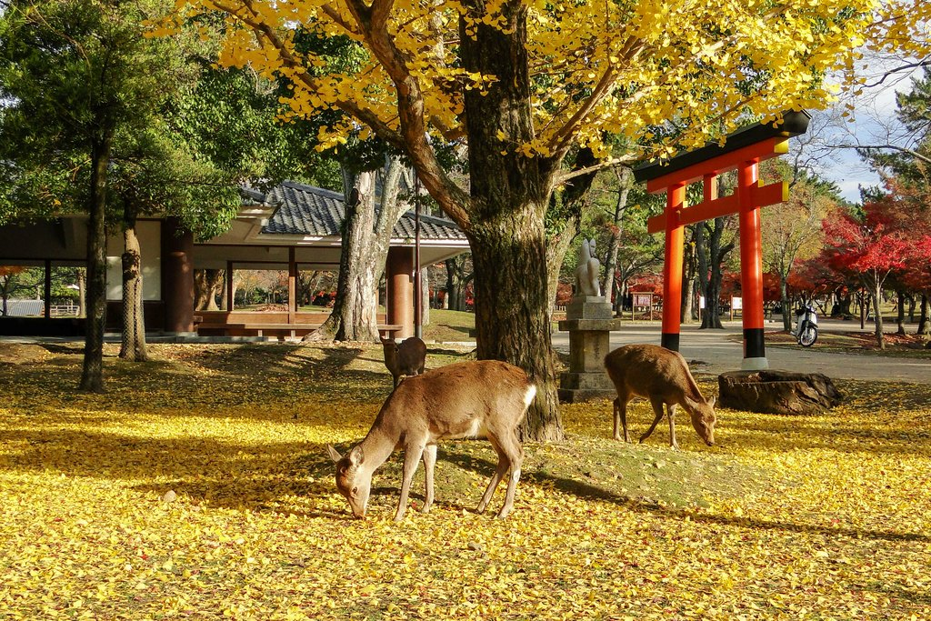Deer and a Torii in a Nara Park