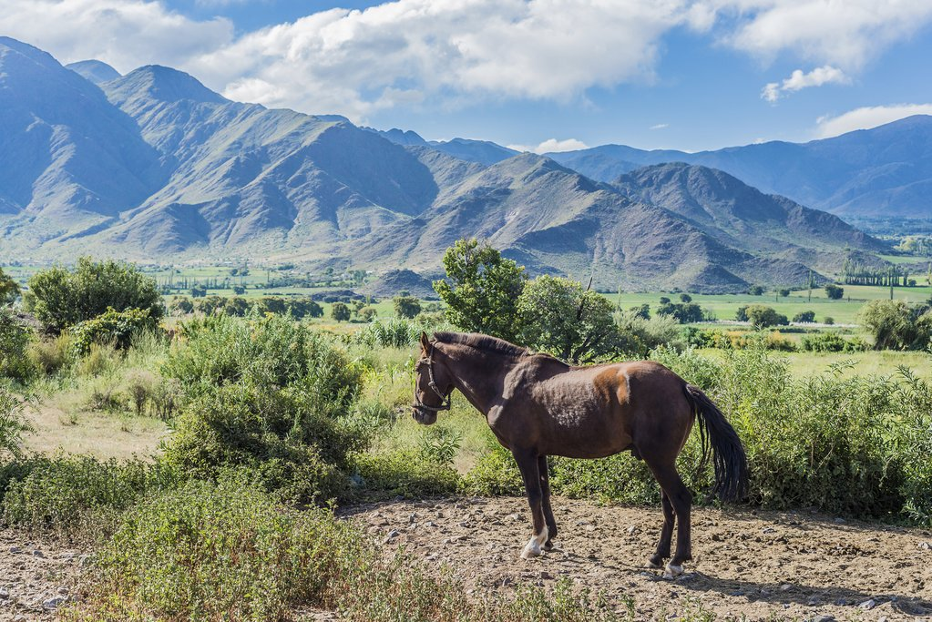 Go horseback riding in the country