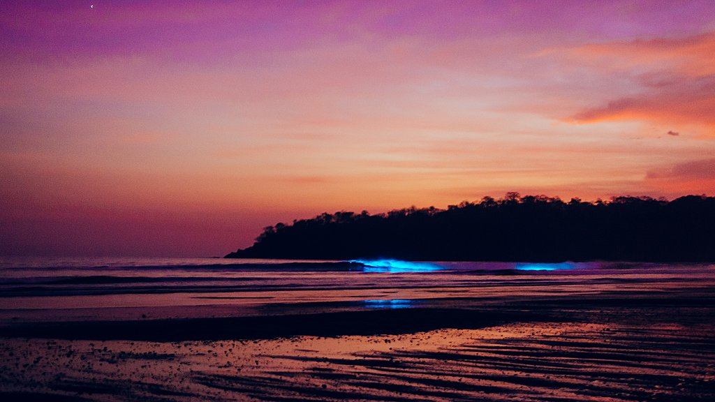 Bioluminescence at dusk