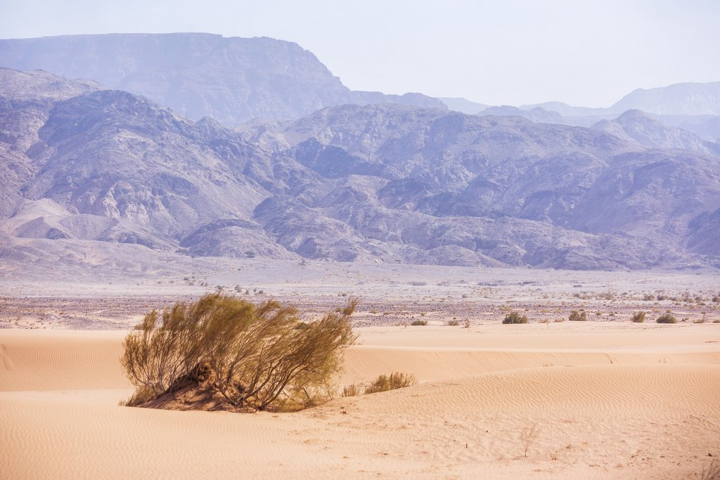 Kandym shrub in the desert