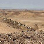 Sheepher at the Agafay desert