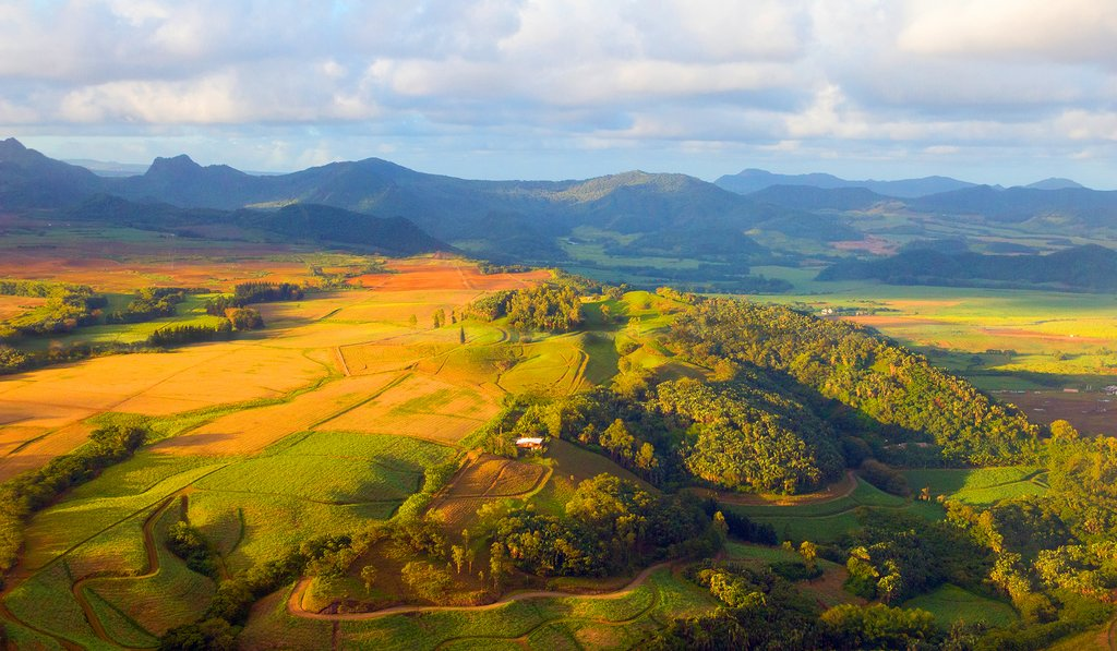 Wave goodbye to the sugarcane fields