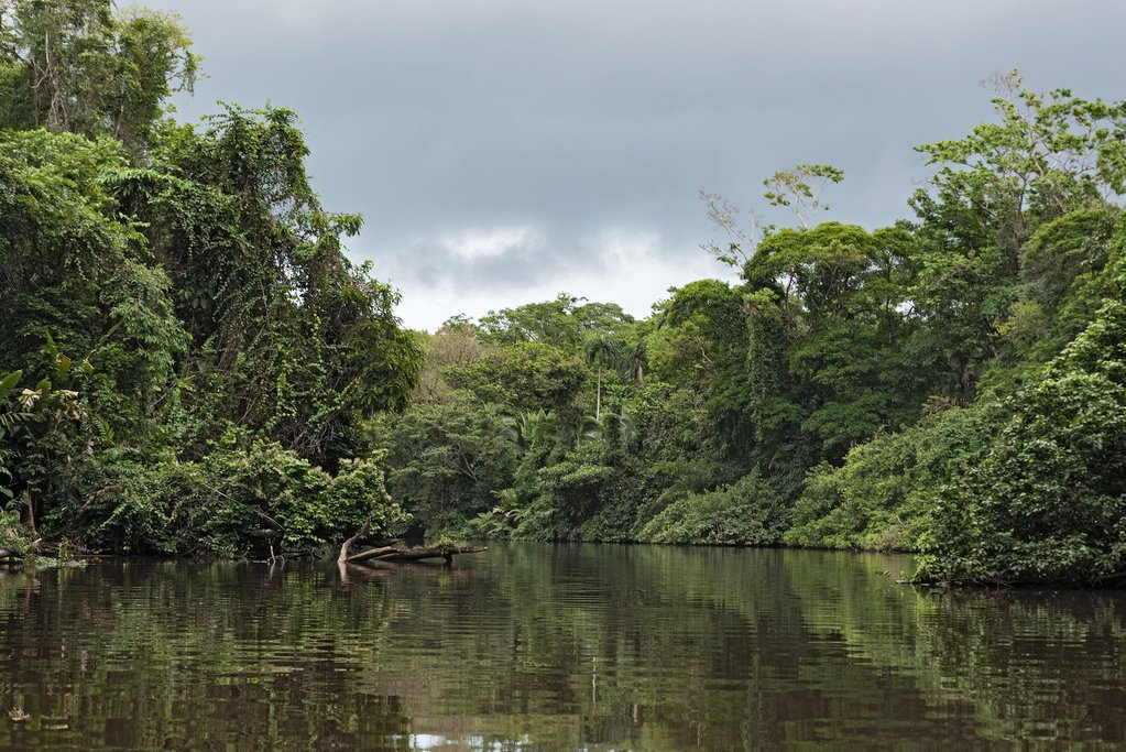 Rainforest on the banks of the Tortuguero River