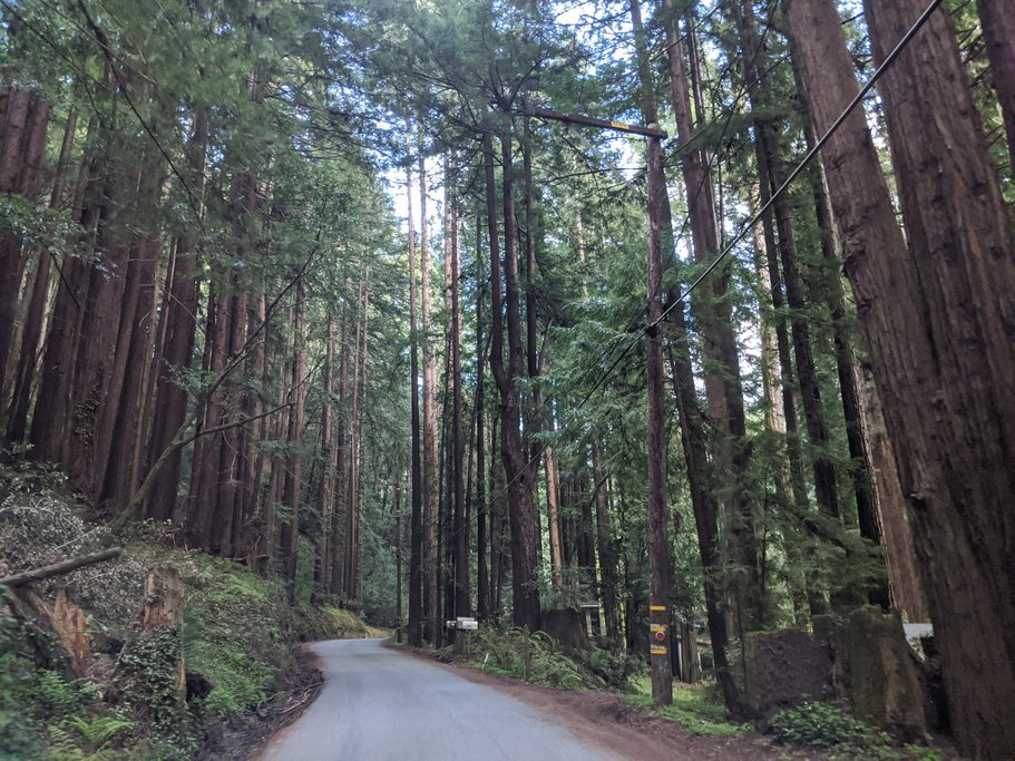 Alpine Road cuts through a dense Redwood forest