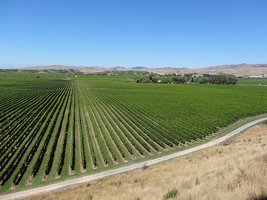 Vineyards cover the area surrounding Blenheim