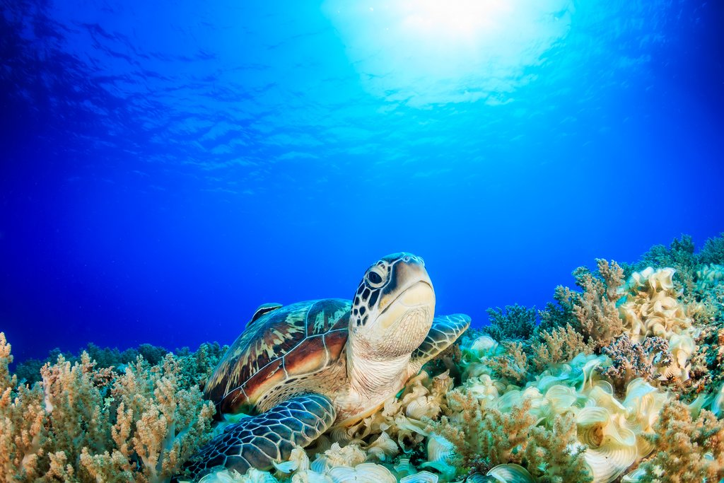 Keep your eyes peeled for sea turtles as you cruise through the ocean