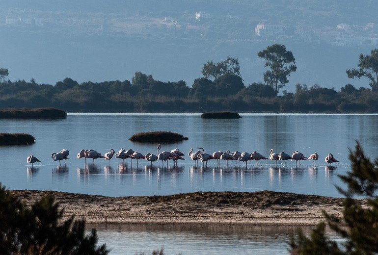 The Famous Flamingoes - Photo from Explore Outdoor Activities