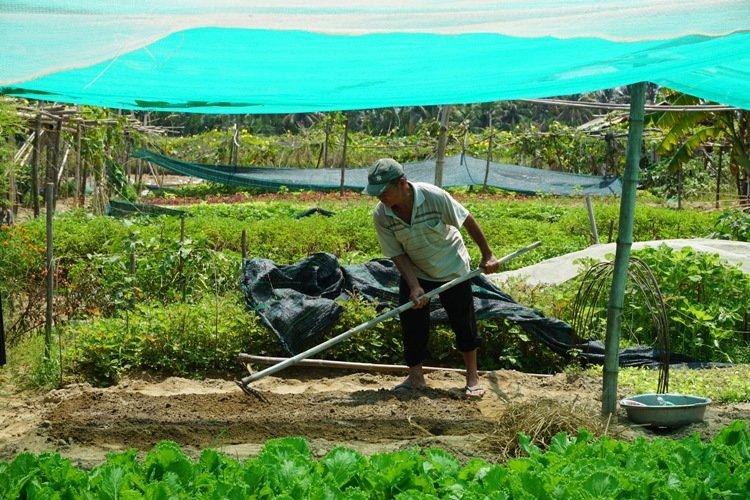 Farming in Hoian