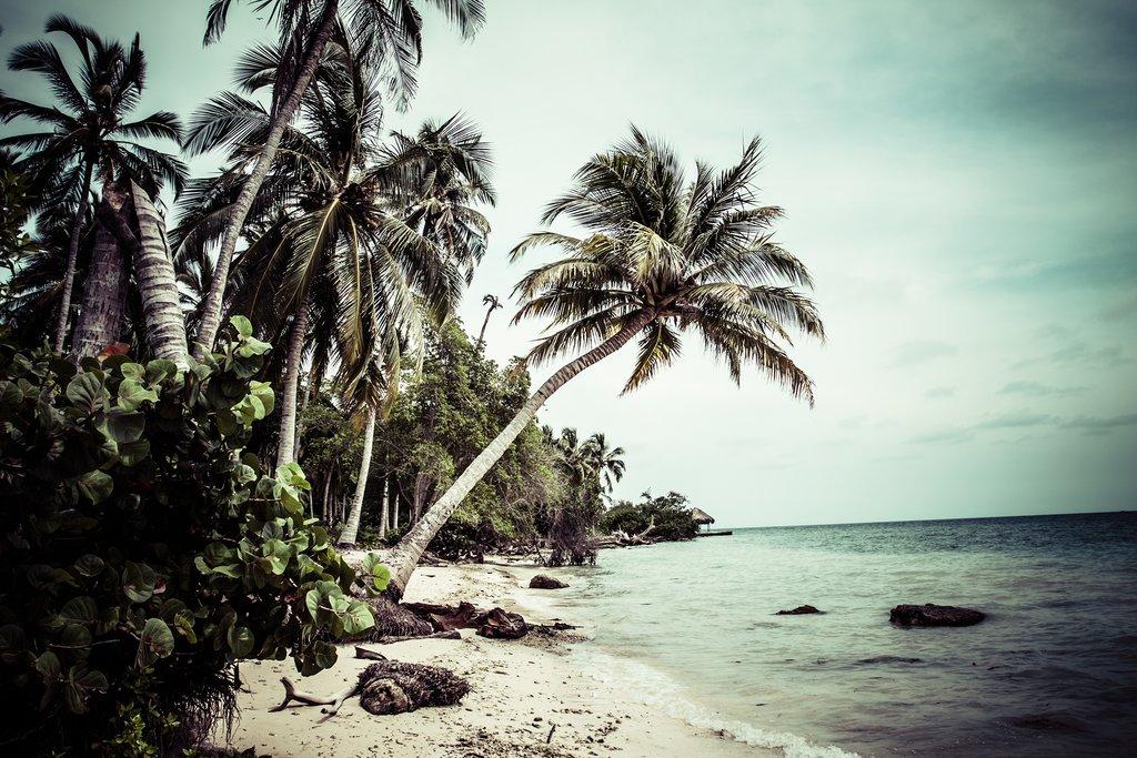 Mucura Island Trees