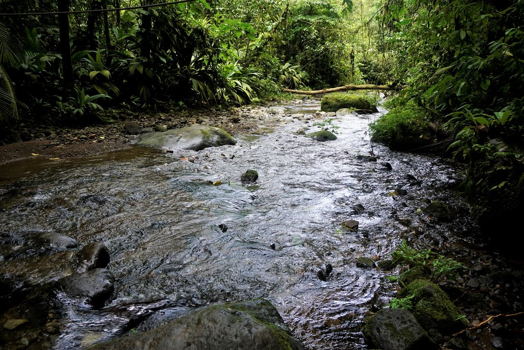 Wild river in the Braulio Carrillo National Park
