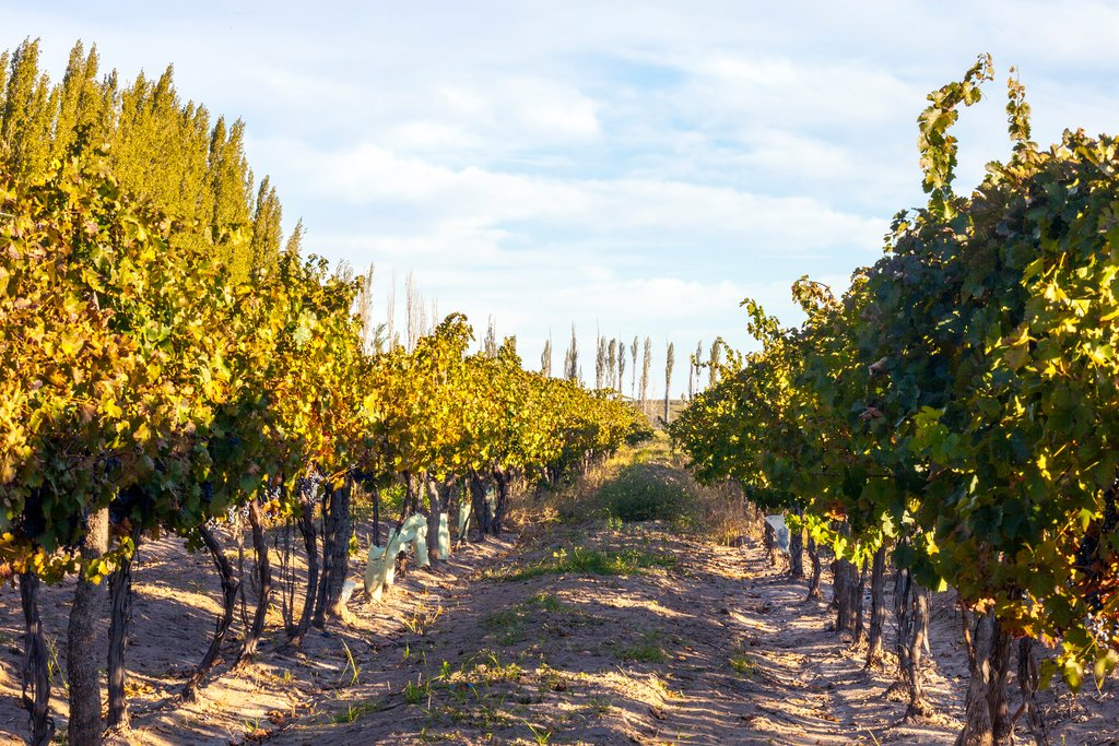 Enjoy a vineyard tour and wine tasting