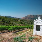 The vineyards of Nemea