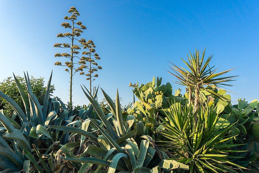 Cretan flora at the botanical park