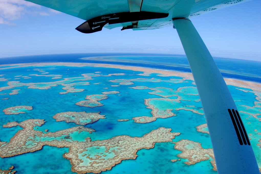 Visit the Barrier Reef