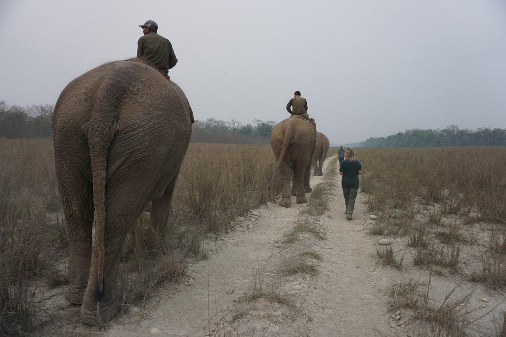 Elephant in the Chitwan Jungle