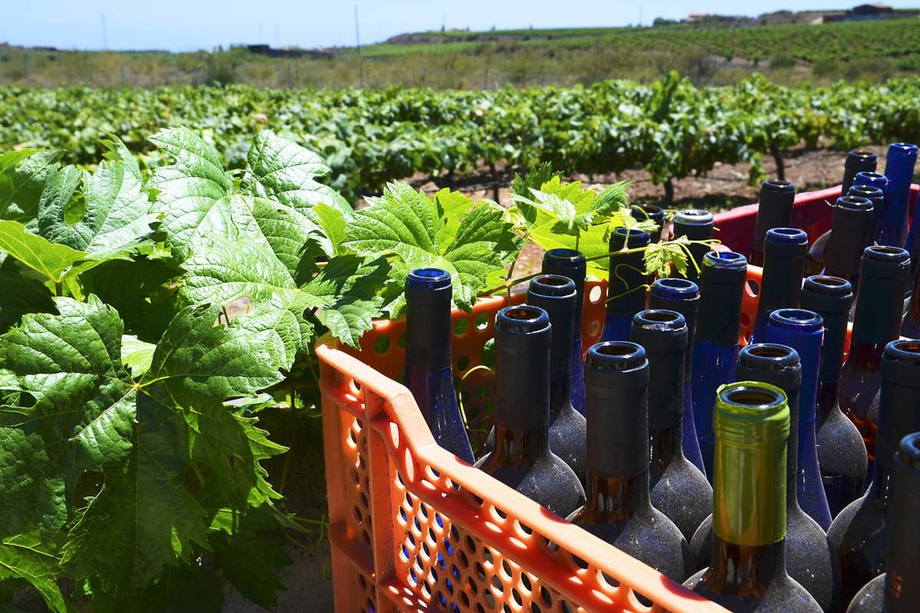 Wineries of the Canary Islands