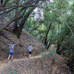 Through Los Trancos Canyon