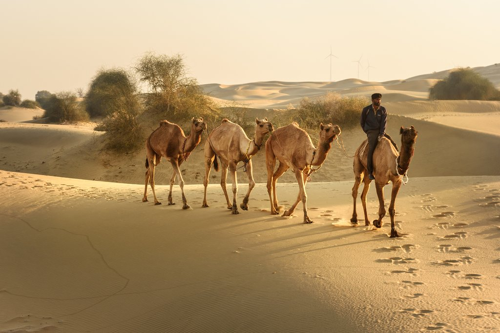 Take a sunset camel ride through the Thar Desert