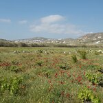 The Beautiful Farm with Wildflowers - Photo from Mykonos Vioma Organic Farm
