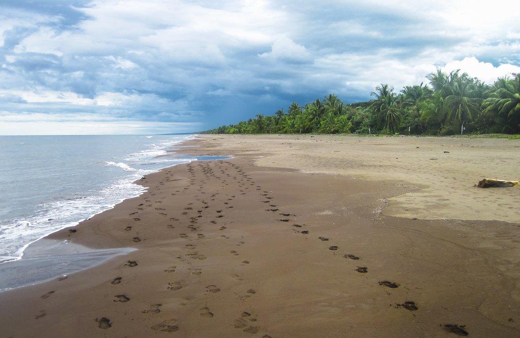 A quiet beach in Tortuguero National Park