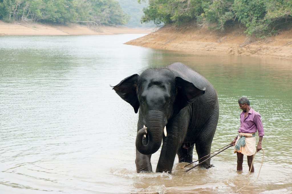 Periyar National Park, Kerala, India